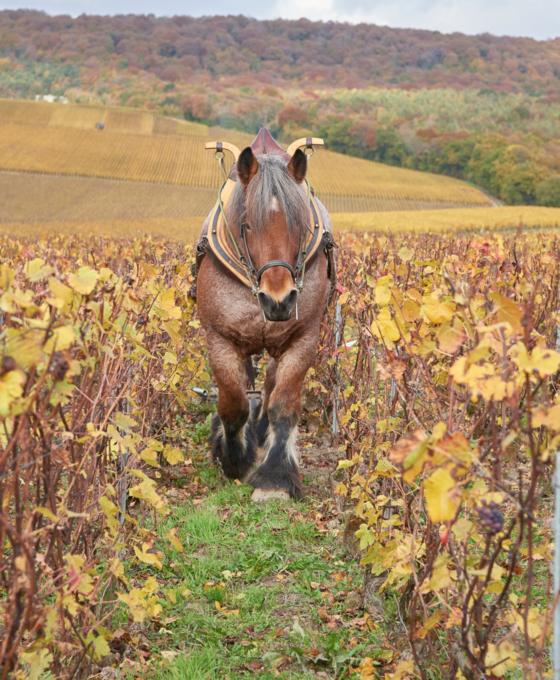 Артизанські вина